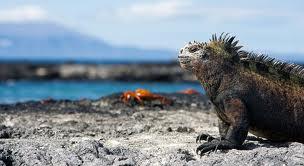 Islas galapagos, un viaje a la prehistoria
