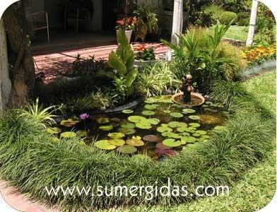 Los estanques criaderos de mosquitos enplenitud for Como eliminar los mosquitos del jardin